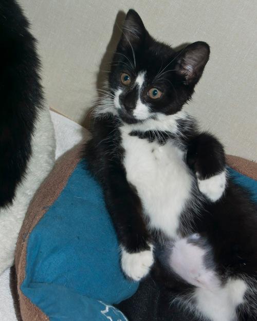 Kitten Tabitha